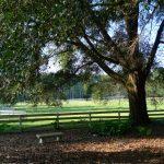 Haile Plantation horse pasture