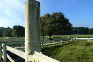 Photo of Haile Plantation horse pasture Gainesville FL