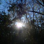 Devil's Millhopper State Park - Gainesville FL