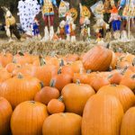 Gainesville Pumpkin Patches