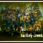 Turkey Creek real estate - Alachua FL