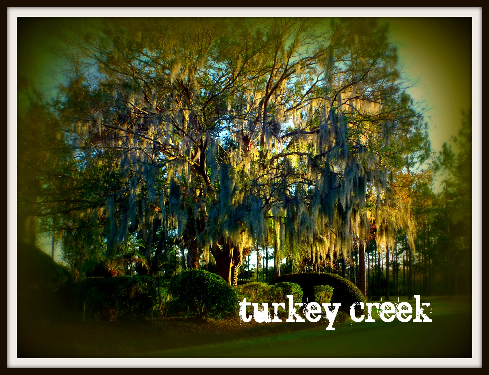 Turkey Creek neighborhood